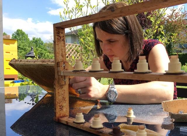Honig aus Kassel - Umlarven Aneta Klose