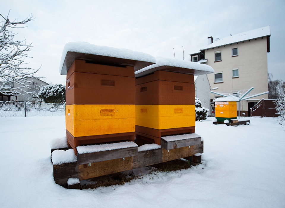 Honig aus Kassel - Unsere Bienenstöcke im Winter